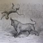 Toros y Tigres